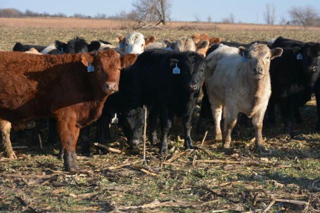 grazing stocks - bill spiegel