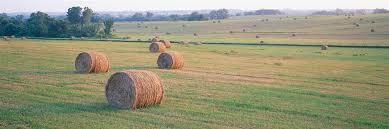 Hay in KS