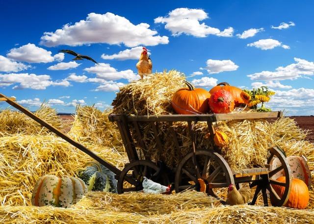 thanksgiving-1674774_960_720.jpg