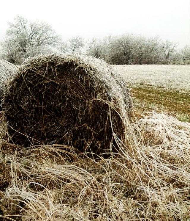 Snowy Hay