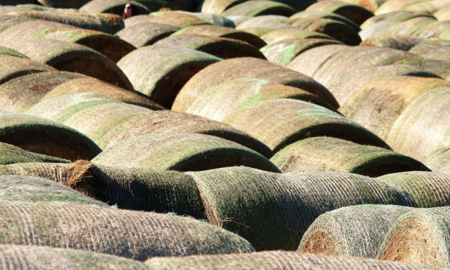 round-hay-bales-close-up