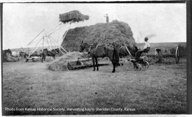 Sheridan Co. Hay